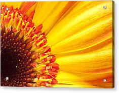 Acrylic Print featuring the photograph Little Bit Of Sunshine by Eunice Gibb