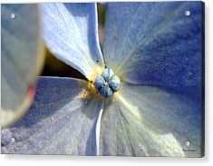 Little Blue Flower Acrylic Print