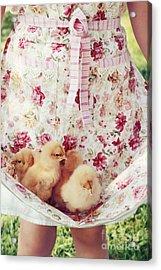 Little Chicks Acrylic Print