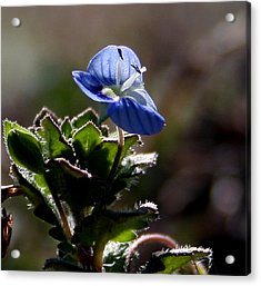 Little Flower Acrylic Print
