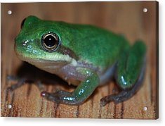Little Frog Acrylic Print by Carrie Munoz