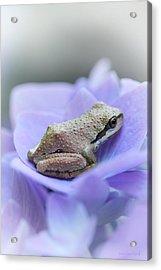 Little Frog On Hydrangea Flower Acrylic Print by Jennie Marie Schell