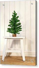 Little Green Fir Tree Acrylic Print by Sandra Cunningham