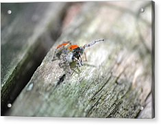 Acrylic Print featuring the photograph Little Jumper by JD Grimes