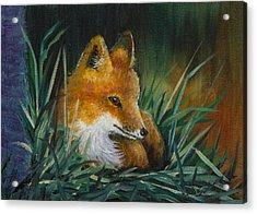 Little Kit Acrylic Print by Dee Carpenter