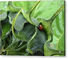 Little Lady Seeks Shelter Within A Green Sunflower Acrylic Print