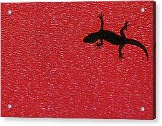 Little Lizard Acrylic Print by Hidayat Mercado