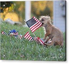 Little Patriot Acrylic Print by Billie-Jo Miller