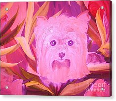 Little Pink Yorkie Acrylic Print by Rachel Carmichael