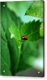 Little Red Lady Acrylic Print