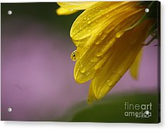 Acrylic Print featuring the photograph Little Sunflower by Yumi Johnson