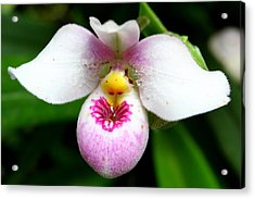 Little White And Pink Orchid Acrylic Print