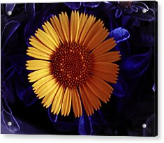 Little Yellow Flower Acrylic Print by Nafets Nuarb