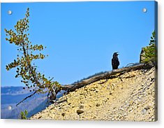 Living On The Edge Acrylic Print by Greg Norrell