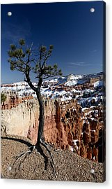 Acrylic Print featuring the photograph Living On The Edge by Karen Lee Ensley