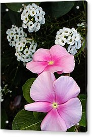 Living Side By Side Acrylic Print by Bruce Bley