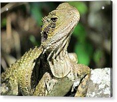 Lizard Acrylic Print by Joyce Woodhouse