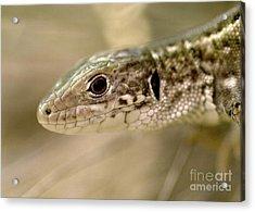 Lizard Portrait Acrylic Print by Odon Czintos