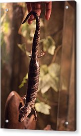 Lizard Tail Acrylic Print