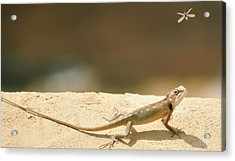 Lizards Acrylic Print by Shahzeb Nasir