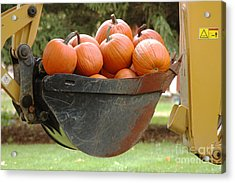 Load Of Pumpkins Acrylic Print by Ginger Harris