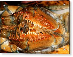 Lobster Mouth Acrylic Print by Ted Kinsman