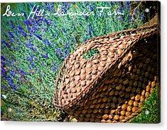 Loess Hills Lavender Acrylic Print by Elizabeth Gingerich
