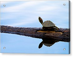 Log Roll Acrylic Print