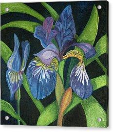 Lois' Iris Acrylic Print by Amy Reisland-Speer