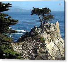 Lone Cypress Tree Acrylic Print
