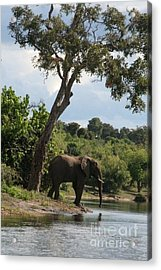 Lone Elephant Water Hole Acrylic Print by Carol Wright
