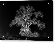 Acrylic Print featuring the photograph Lone Tree 002 by George Bostian