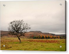 Lone Tree And Higger Tor Acrylic Print by Siobhan Brennan-Raymond