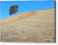 Lone Tree At Coyote Hills California . 7d10906 Acrylic Print by Wingsdomain Art and Photography