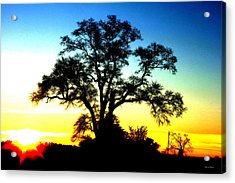 Acrylic Print featuring the photograph Lone Tree At Sunrise by George Bostian