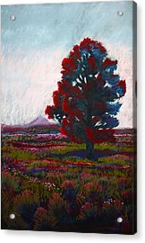 Acrylic Print featuring the photograph Lone Tree by Drusilla Montemayor
