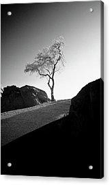 Lone Tree Acrylic Print by G Wigler