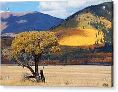 Acrylic Print featuring the photograph Lone Tree by Jim Garrison