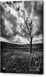 Lone Tree On The Ayrshire Moors Acrylic Print by John Farnan