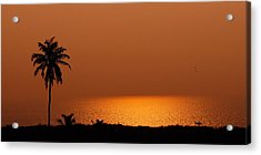 Lone Tree Silhouette During Sunset Acrylic Print by Hegde Photos