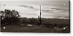 Lonely Cactus Acrylic Print