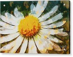 Lonely Daisy Acrylic Print