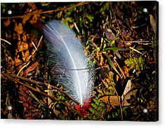 Lonely Feather Acrylic Print by Doug Long