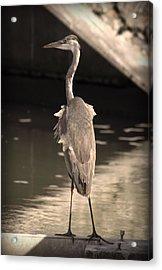 Lonely Flamingo Bird Acrylic Print by Radoslav Nedelchev