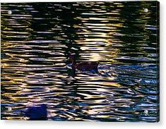Lonely Swim Acrylic Print by Joshua Dwyer