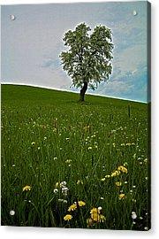 Lonely Tree ...  Acrylic Print