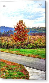Lonely Tree 2 In Otto Armleder Park Acrylic Print