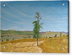 Lonely Tree In Africa Acrylic Print by Glenn Harden