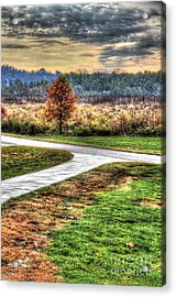 Lonely Tree In Otto Armleder Park Acrylic Print