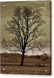Lonely Tree Acrylic Print by Marty Koch